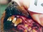 原材料、主要成分、その他の情報2: リーバスリー 29.6ml [ (株)ミネルヴァ]口内環境を整える超人気液体歯磨き、歯石除去