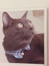 スプリングチェック カラー (S、Mサイズ)猫用首輪 Cat Amo.k