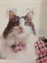 ピンチェックカラー (S、Mサイズ)猫用首輪 Cat Amo.k