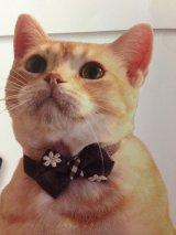 レースの花 カラー (S、Mサイズ)猫用首輪 Cat Amo.k
