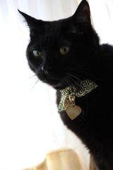 猫に小判カラー (S、Mサイズ)猫用首輪 Cat Amo.k