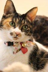 毬りぼん カラー (S、Mサイズ)猫用首輪 Cat Amo.k