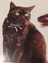 さかな泥棒 カラー (S、Mサイズ)猫用首輪 Cat Amo.k