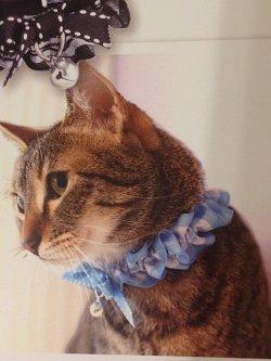 画像1: リボンシュシュ カラー (S、Mサイズ)猫用首輪 Cat Amo.k