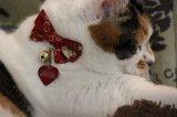 帯結びりぼん カラー (S、Mサイズ)猫用首輪 Cat Amo.k