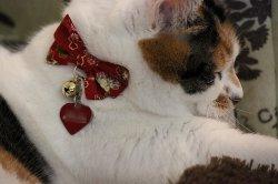 画像1: 帯結びりぼん カラー (S、Mサイズ)猫用首輪 Cat Amo.k