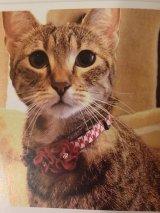 千鳥 フラワー カラー (S、Mサイズ)猫用首輪 Cat Amo.k