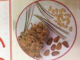 パインエナジー(松の実)60カプセル ペット用栄養補助食品ー免疫力強化と抗酸化作用に有効