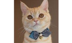 画像2: ポインテッド カラー (S、Mサイズ)猫用首輪 Cat Amo.k