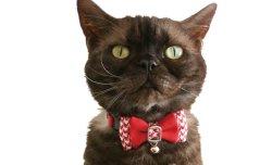 画像2: 千鳥リボン カラー (S、Mサイズ)猫用首輪 Cat Amo.k